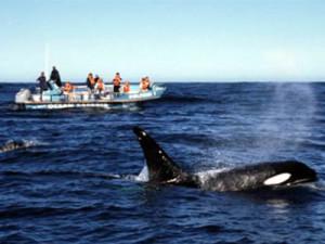 Ocean Safaris